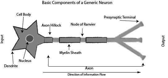 Neuron Illustraion