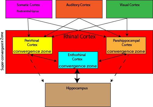 Rhinal Cortex