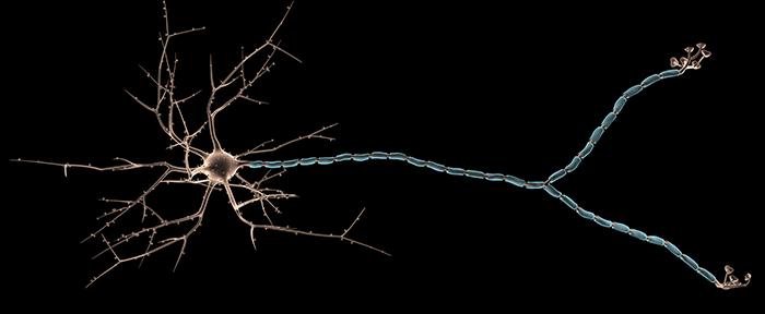 bigstock-multipolar-neuron-s