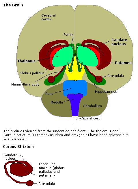 Constudoverbrain
